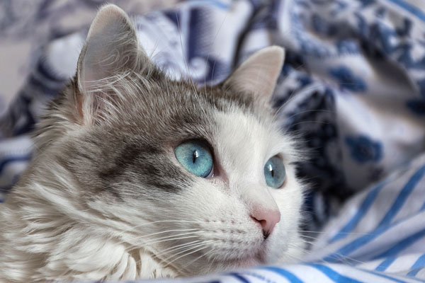 Cattery web site design for Town Furlong Cattery